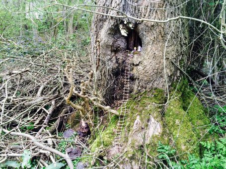 Photo of a 'fairy den' seen at Blanchmans Farm and Nature Reserve in Warlingham, Surrey