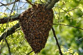 Bee Removal Tandridge