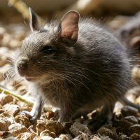 Rodent control by BW Pest Control